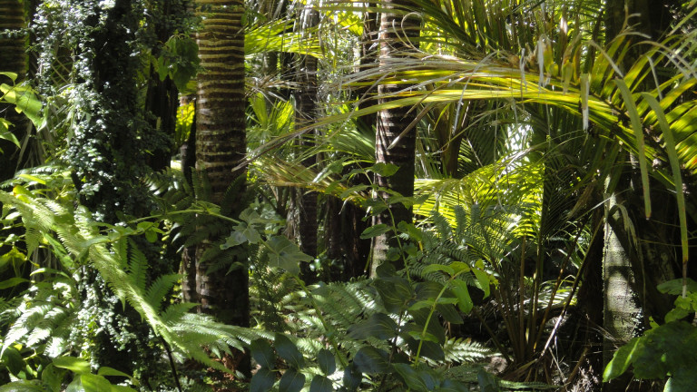 rainforest-78516_1920