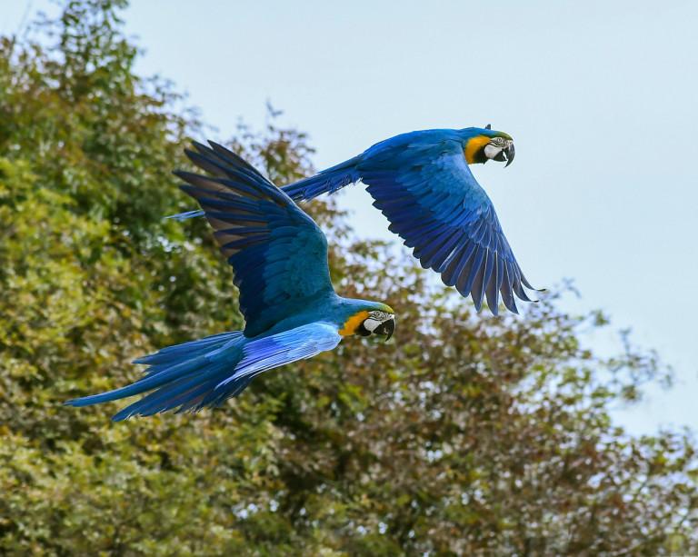 parrot-2892028_1280