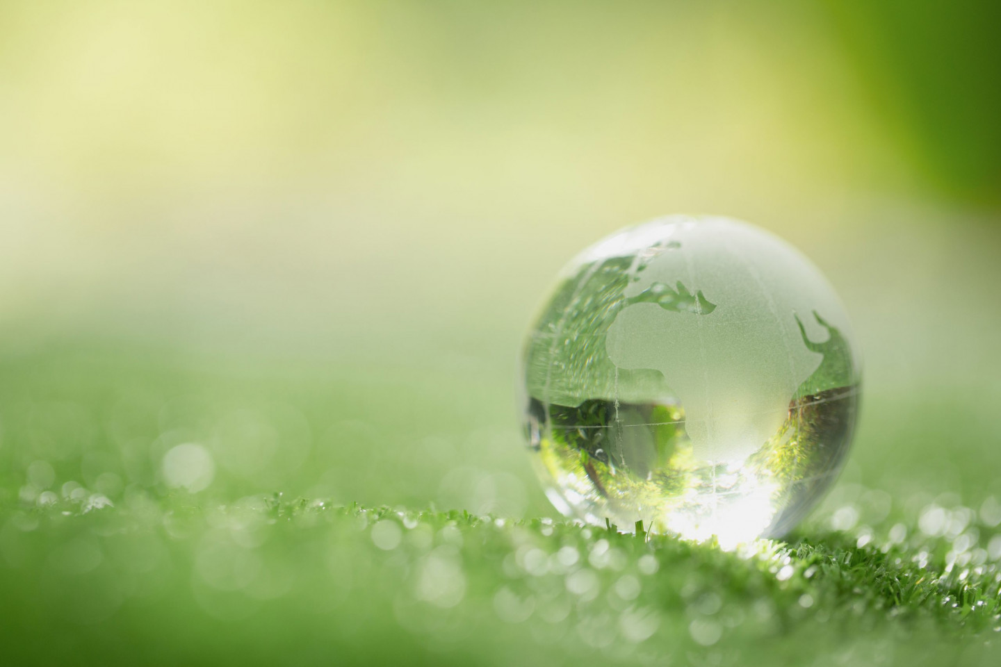 Close up of crystal globe resting on grass in a forest - environ
