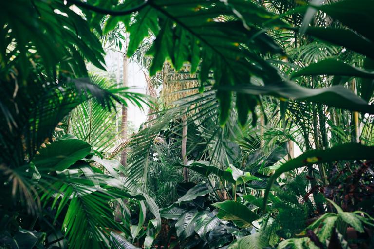 Jardines Botánicos - Blog ONG Vitalis