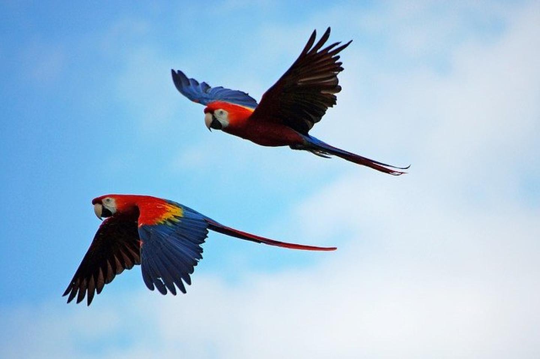 parrots-1612070_640